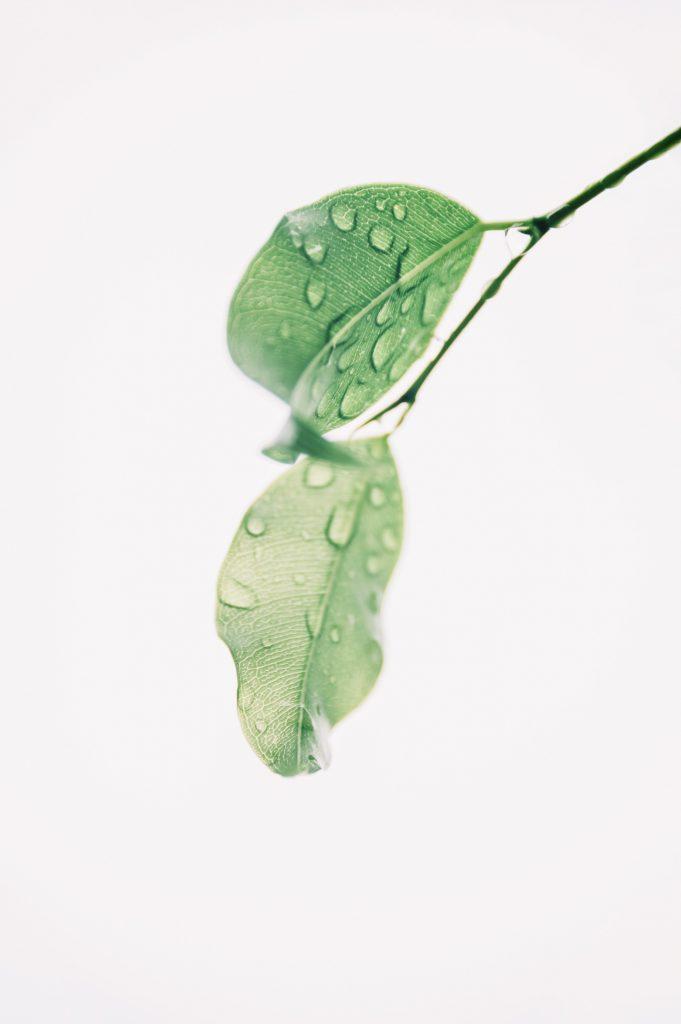 blur-botany-clean-1650627(1)